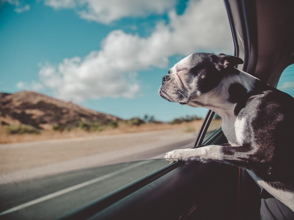 How to Rent Pet Friendly Apartments