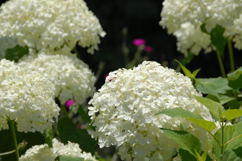 denver botannical garden