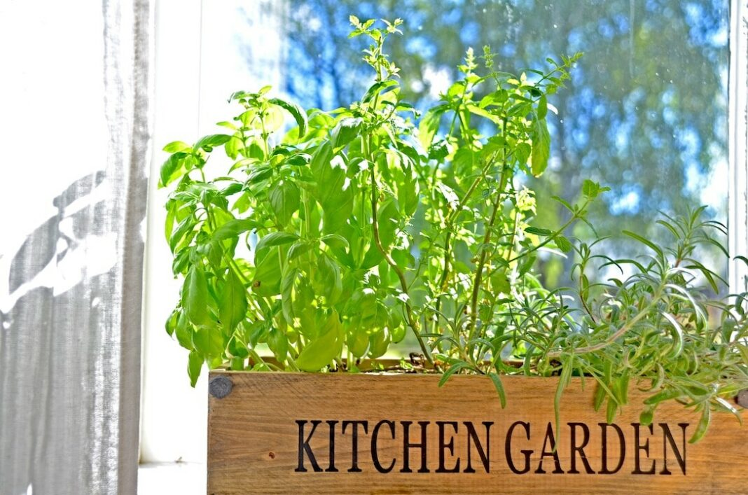 Herbs growing on kitchen window sill