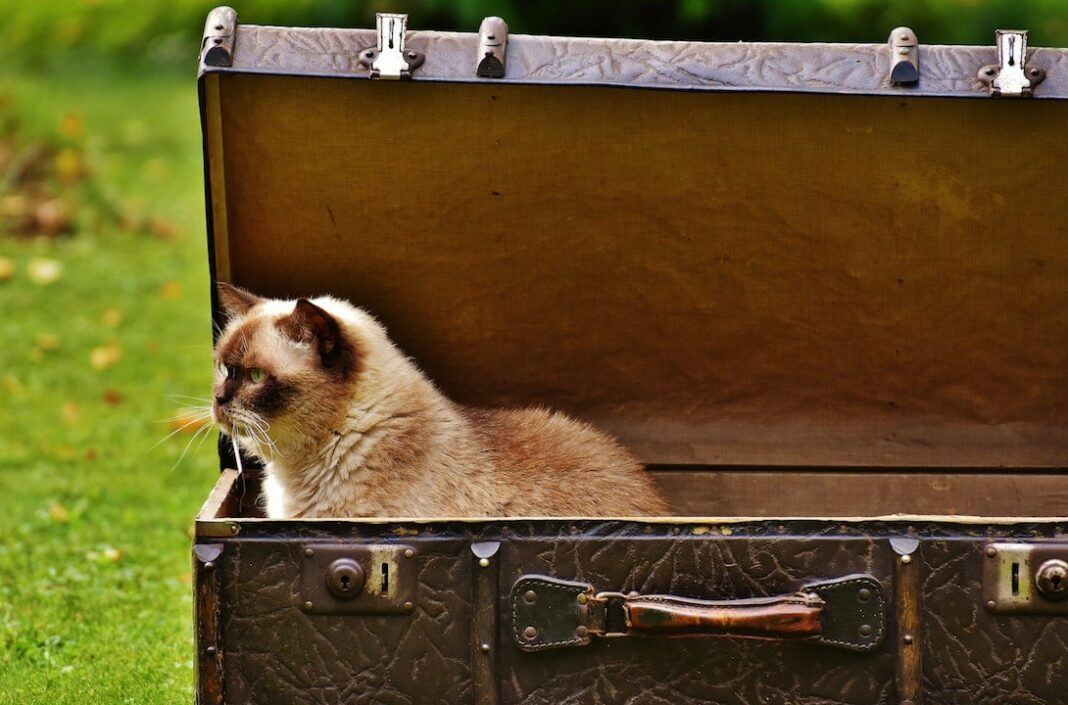 cat in a luggage piece