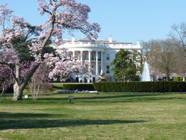 Washington Dc Apartments For Rent Padmapper